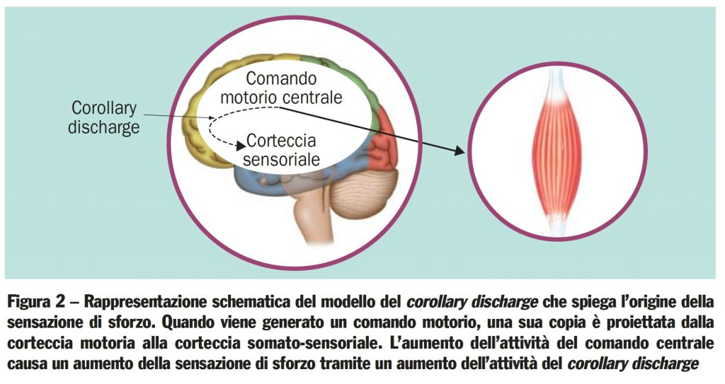 modello psicobiologico percezione della fatica